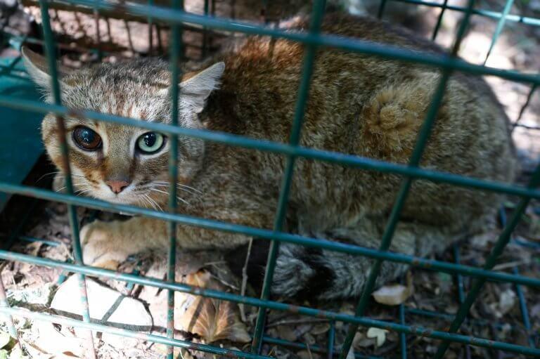 fox-cat 猫狐 ネコギツネ 新種 キツネネコ ネットニュース