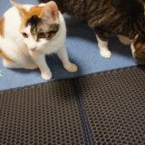 Xcommerce 猫砂取りマット 猫マット トイレマット 二重構造 折り畳み式 超大サイズ 飛び散り防止マット 防カビ 猫トイレ