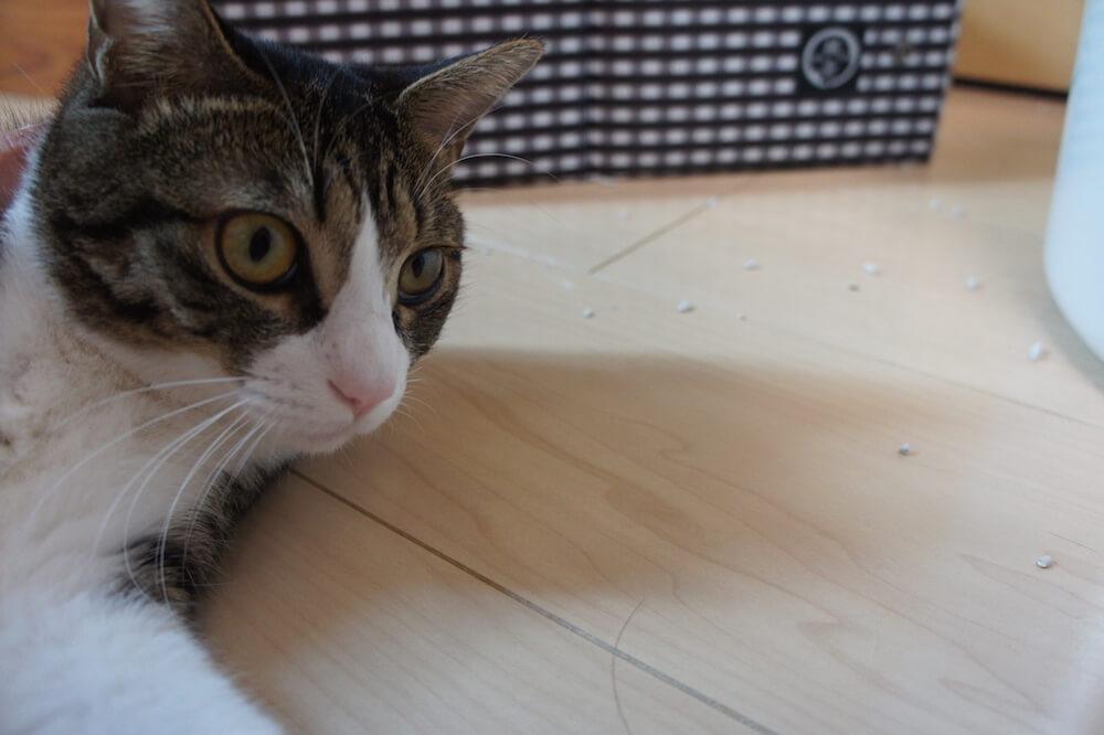 猫砂 猫トイレ 飛び散る 飛散