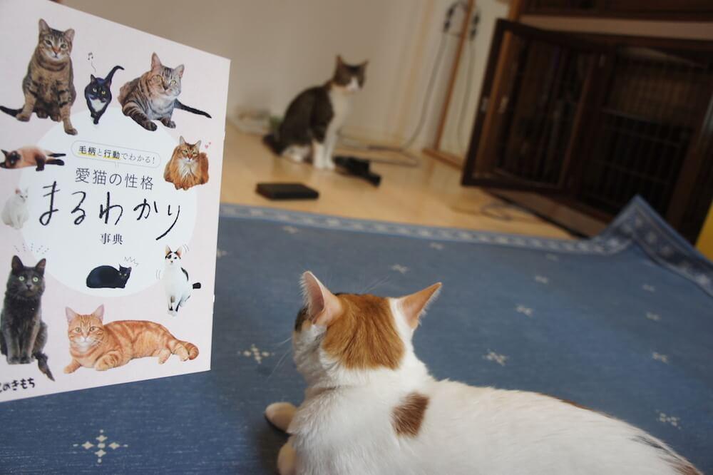 ねこのきもち 猫の気持ち 2019 08月号 購読 感想 猫 別冊 ふろく 付録 猫の性格 まるわかり 事典
