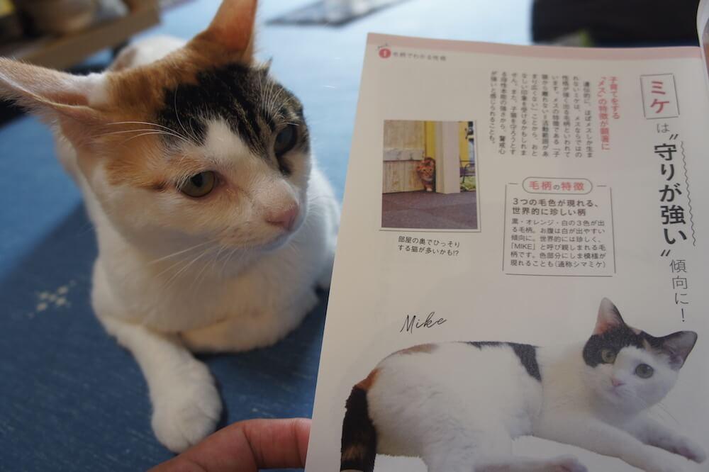 ねこのきもち 猫の気持ち 2019 08月号 購読 感想 猫 別冊 ふろく 付録 猫の性格 まるわかり 事典 三毛猫