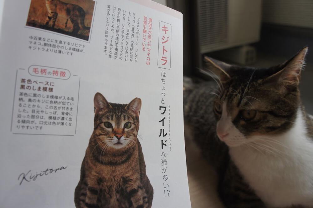 ねこのきもち 猫の気持ち 2019 08月号 購読 感想 猫 別冊 ふろく 付録 猫の性格 まるわかり 事典 キジトラ キジ白