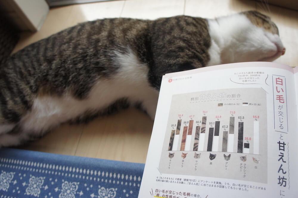 ねこのきもち 猫の気持ち 2019 08月号 購読 感想 猫 別冊 ふろく 付録 猫の性格 まるわかり 事典 キジ白 白混じり