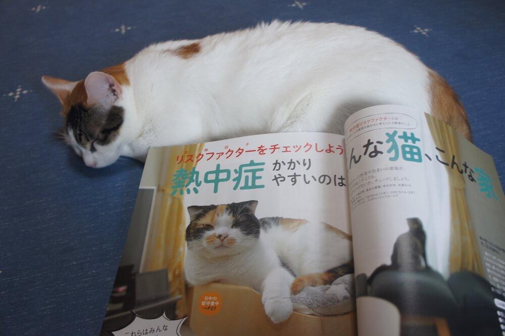 ねこのきもち 猫の気持ち 2019 08月号 購読 感想 猫 熱中症