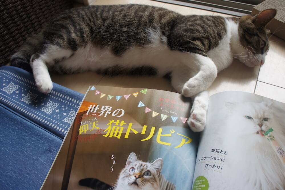 ねこのきもち 猫の気持ち 2019 08月号 購読 感想 猫 トリビア へぇ