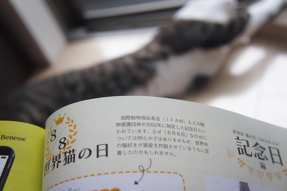 ねこのきもち 猫の気持ち 2019 08月号 購読 感想 猫 トリビア へぇ 世界猫の日