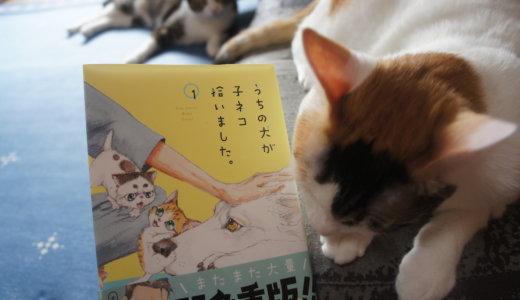 【うちの犬が子ネコ拾いました。】犬が主人公の猫マンガ!犬派も猫派も満足な漫画です!