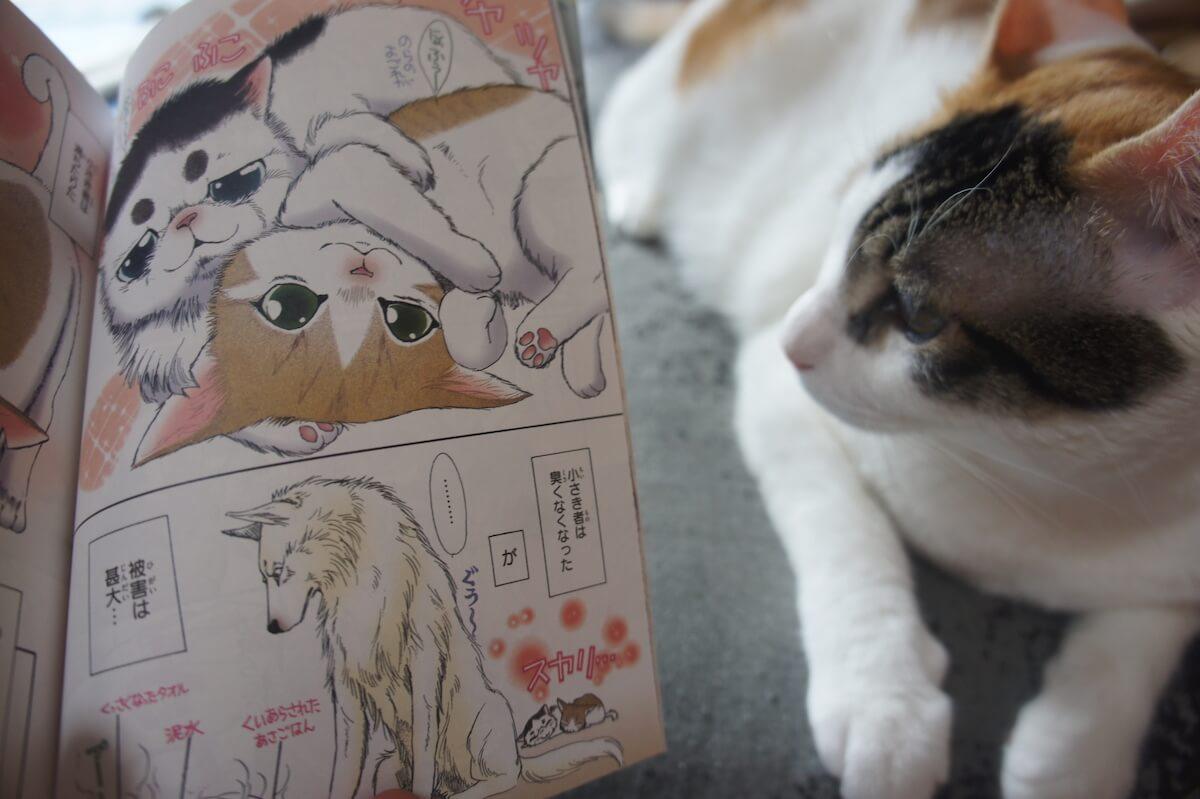 うちの犬が子ネコを拾いました。 猫マンガ 感想 レビュー 三毛猫