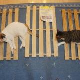 すのこ ニス塗り 防水 コーティング 三毛猫 キジ白 DIY 猫DIY