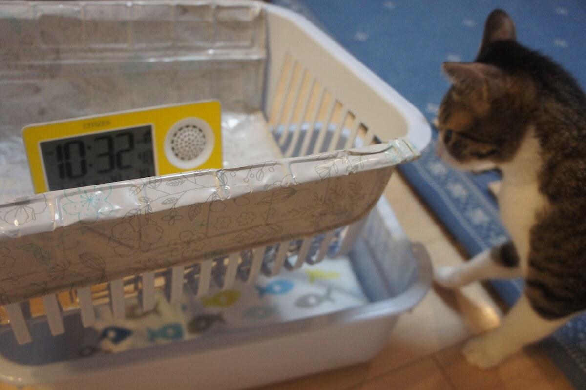 ねこのきもち エアコン無し 暑さ対策 ひんやり猫ベッド ダイソー アイテム 猫避暑地 100均 100円ショップ