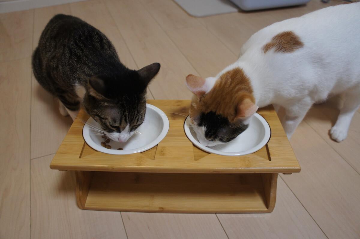 猫用ご飯皿 ボウル2つ ご飯台 食器台 猫耳 三毛猫 キジ白