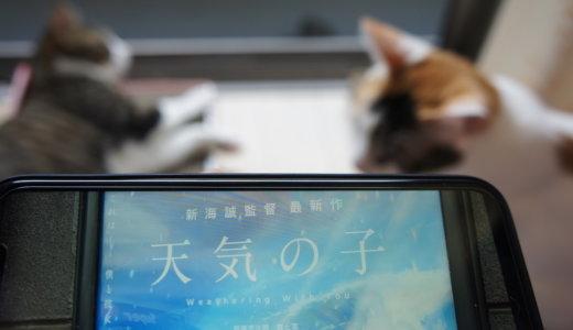 ハチワレのアメちゃんという猫が登場する新海誠監督最新作「天気の子」を観てきました!