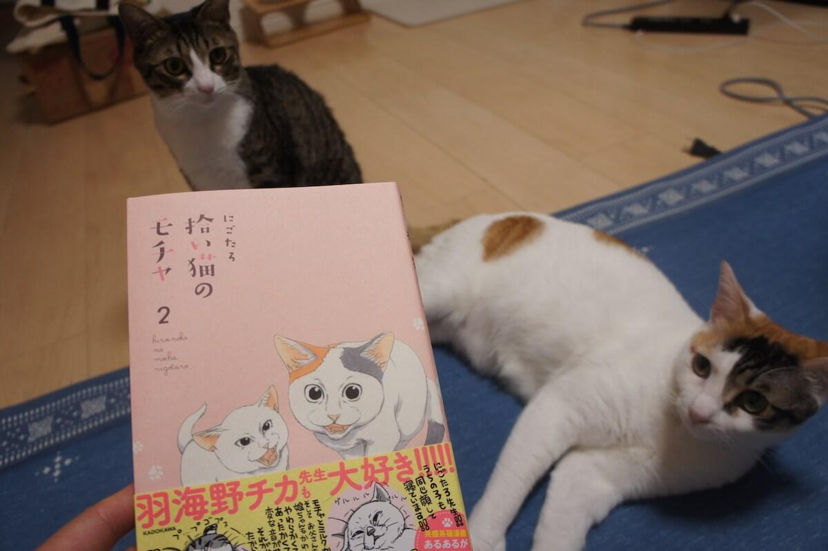 拾い猫のモチャ 感想 レビュー 書籍 三毛猫 保護猫 元野良猫 猫漫画 ミルク