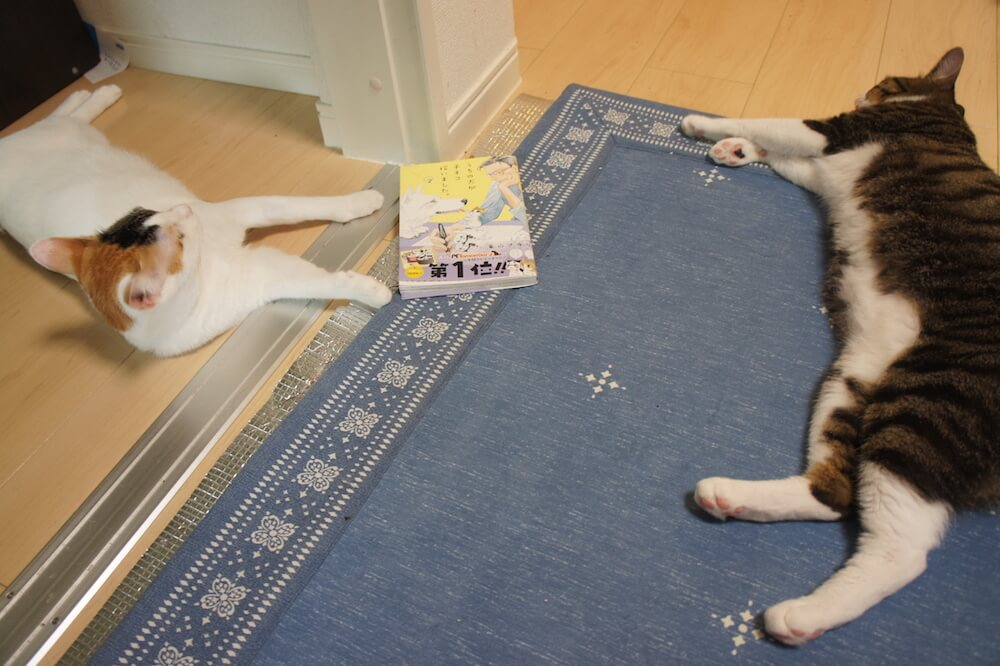 うちの犬が子ネコを拾いました。 猫マンガ 感想 レビュー うちネコ 2巻