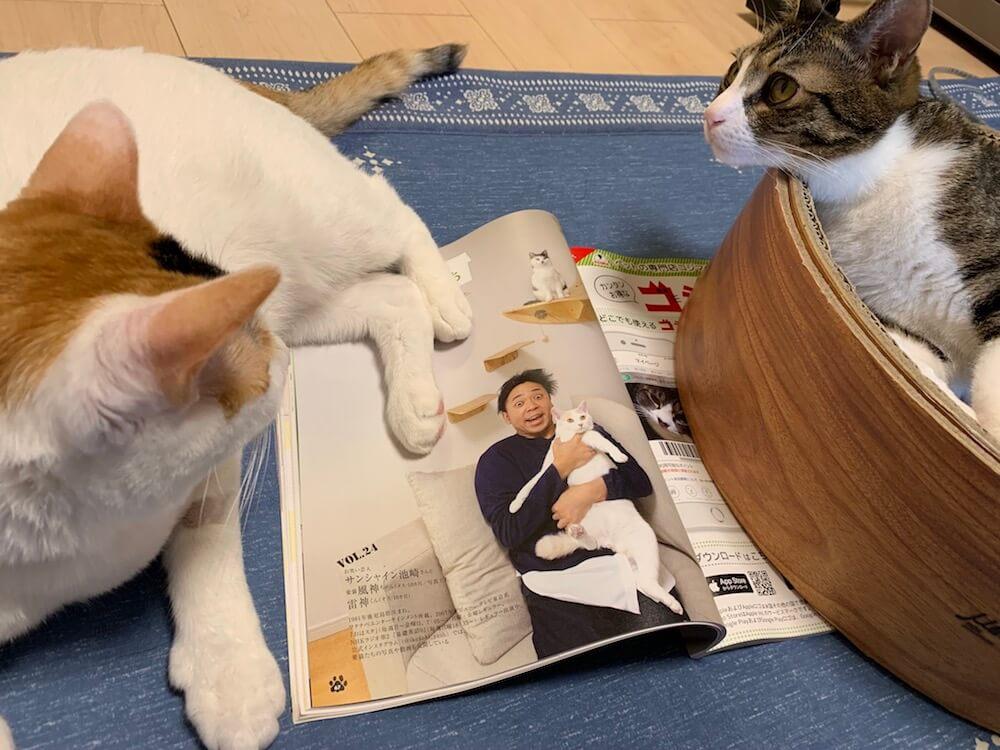 サンシャイン池崎 Twitter 裏垢 悪口 猫好き 猫 風神 雷神