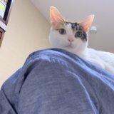 にゃんぱく宣言 三毛猫 猫の奴隷 猫に仕える 猫のペット