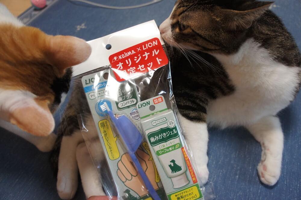 猫 歯みがき 歯ブラシ 歯みがきジェル petkiss lion コジマ レビュー 感想 口コミ キジ白 三毛猫