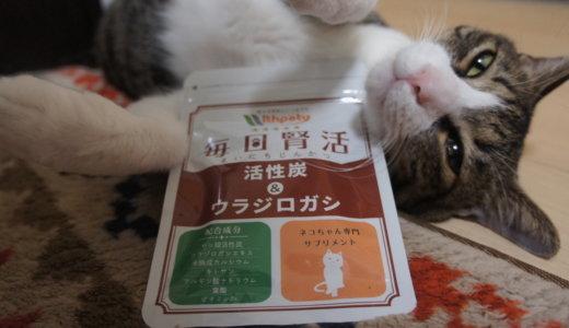 【毎日腎活】腎不全から猫を守るサプリメントを実際に食べてみた感想!これで腎臓病が治る時代まで耐えられるかも!?