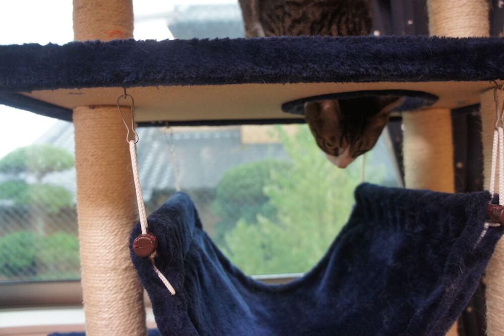 キャットタワー レビュー 半年 タンスのゲン 掃除 人気 スポット