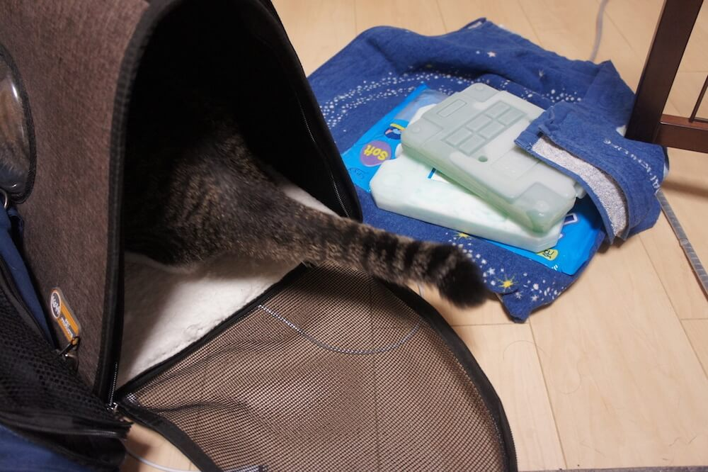 猫 ワクチン コアワクチン 3種混合 病院 キャリー 保冷剤