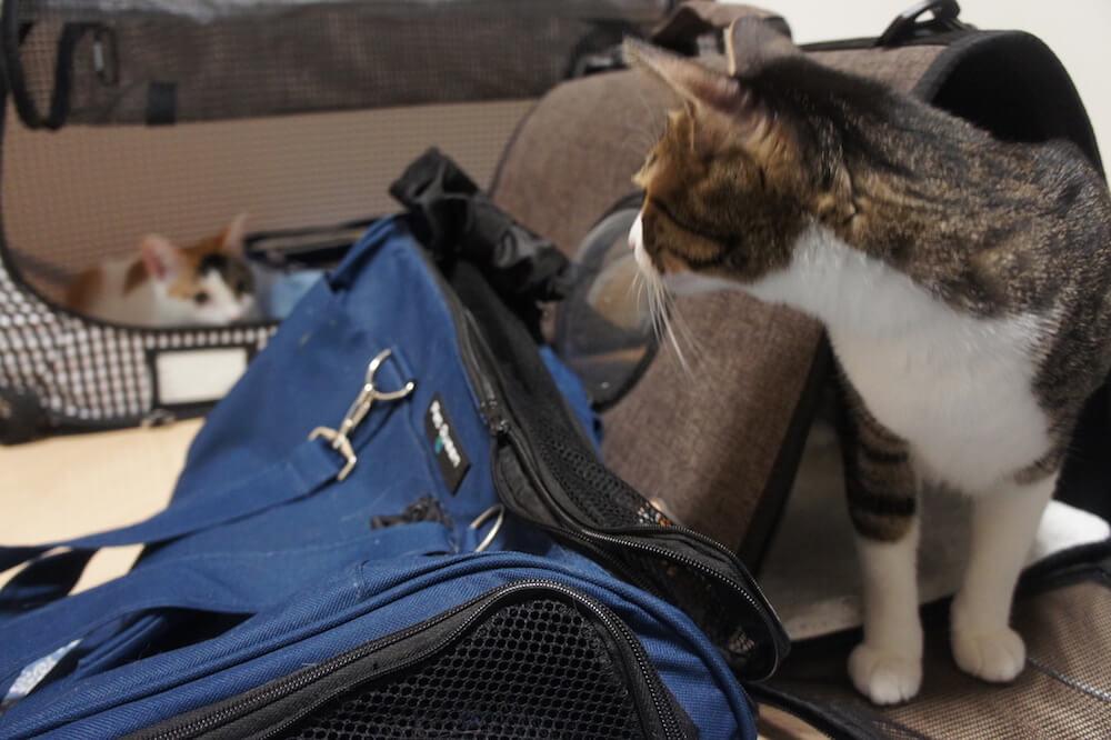 猫 ワクチン コアワクチン 3種混合 病院  キャリー