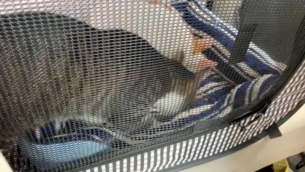 猫 ワクチン コアワクチン 3種混合 病院 おやつ