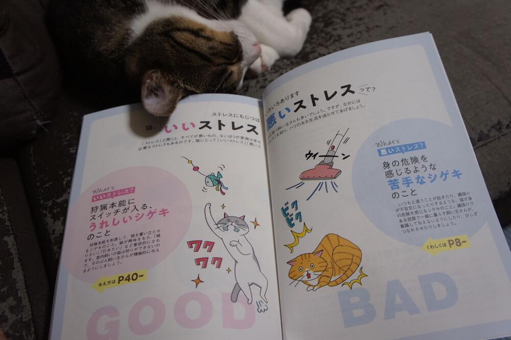 ねこのきもち 猫の気持ち 2019 10月号 購読 感想 猫