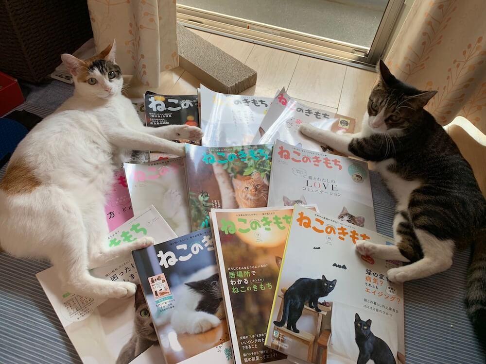 ねこのきもち 解約 年間購読 終わり 三毛猫 キジ白 猫雑誌 猫の気持ち