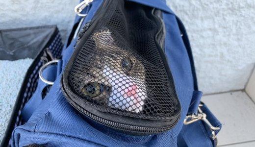 猫を動物病院に預けて二泊三日の旅行に行ってきました!