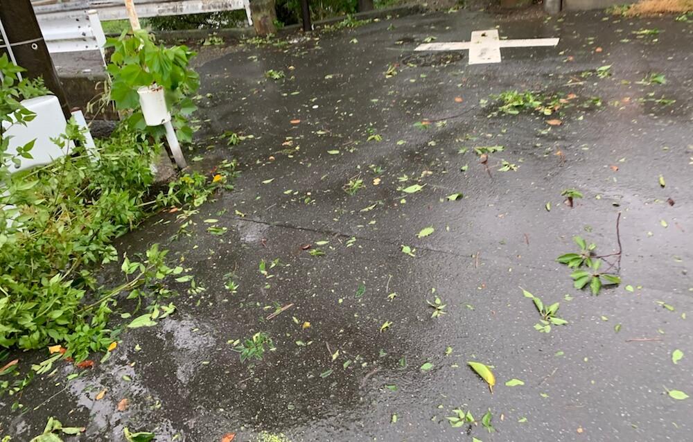 台風15号 関東直撃 関東上陸 被害 三毛猫 キジ白 猫の様子 空の様子