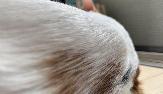 猫の背中にシコリ!病院で診てもらった結果はワクチンによる注射部位肉腫ってやつなのかな?