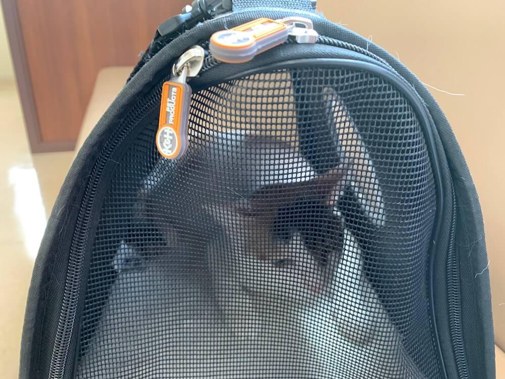 猫 背中 腰 シコリ 病院 三毛猫