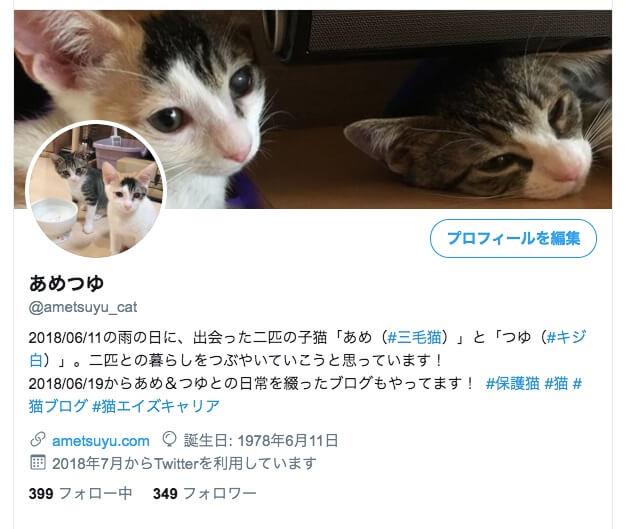 Twitter 猫 アカウント sns  三毛猫 キジ白