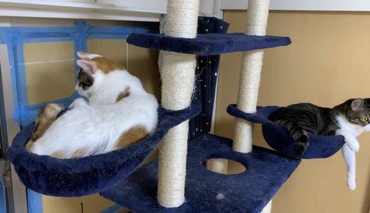 有事の際は当然、猫を連れての避難します!ペットとの避難について自治体に確認してみました。