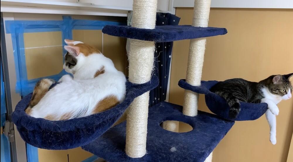 台風 地震 避難 同行避難 同伴避難 ペット 猫 禁止