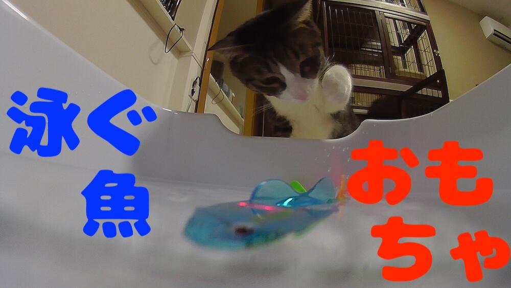猫 おもちゃ 魚 泳ぐ 水中 三毛猫 キジ白 レビュー 感想