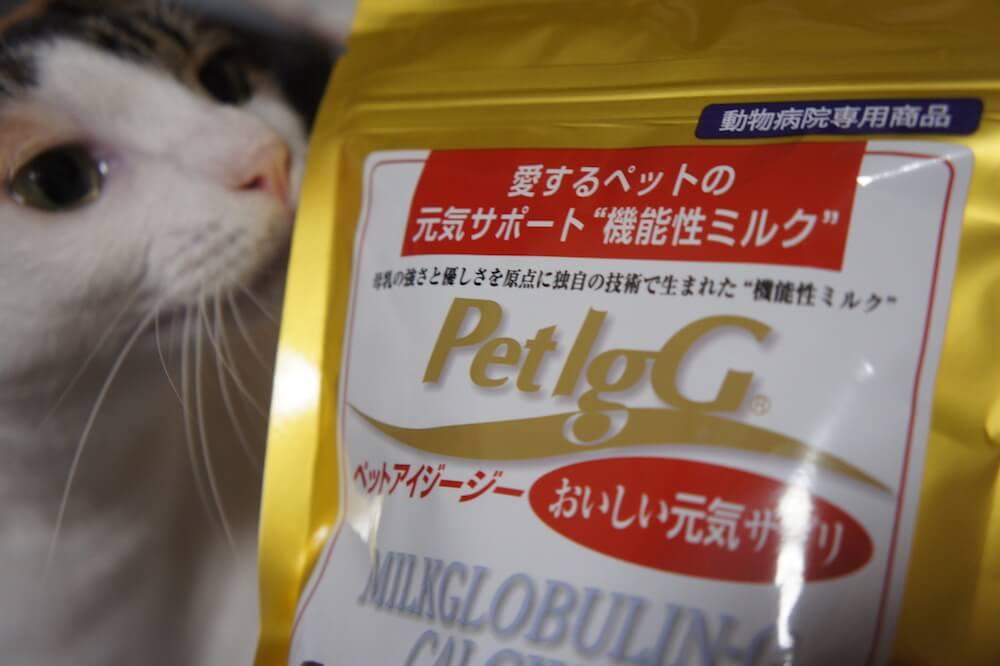 PetIgG ペットアイジージー 機能性ミルク 免疫 サプリメント 猫用 ペット 犬 三毛猫 キジ白