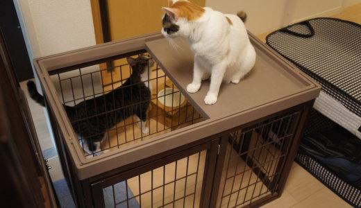 三段ケージが猫2匹の重さに耐えられなかった!傾いてきたので対策!キャスターから卒業します!