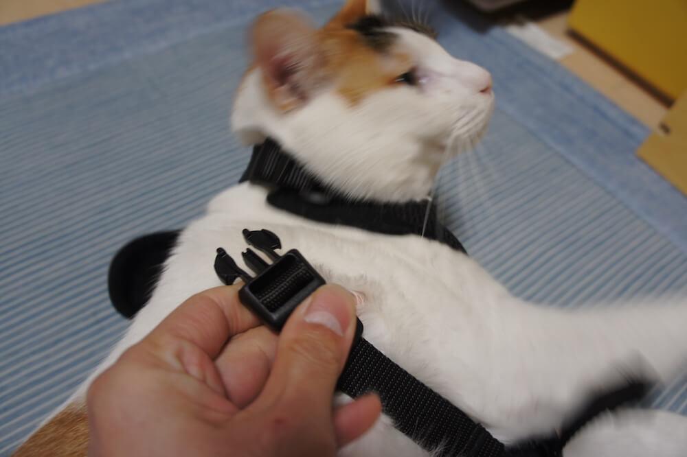 猫 ハーネス リード レビュー 感想 口コミ 三毛猫 キジ白