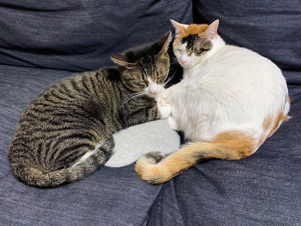 キジ白 三毛猫