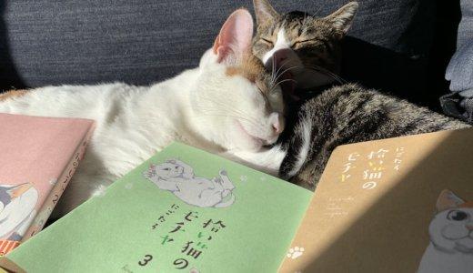 【感想:拾い猫のモチャ3】描き下ろしの話が素敵過ぎる!「モチャ」の名前の由来も明らかに!