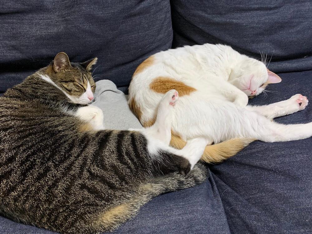 猫 湯たんぽ オススメ ファシー fashy 柔らかい シリコン PVC ゴム キジ白 三毛猫
