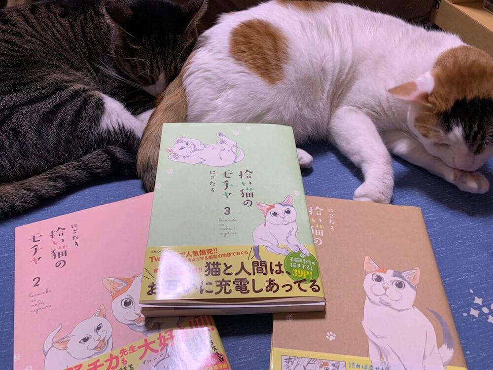 モチャ 三毛猫 ミルク 猫漫画 猫マンガ 感想 レビュー 書評 Twitter SNS