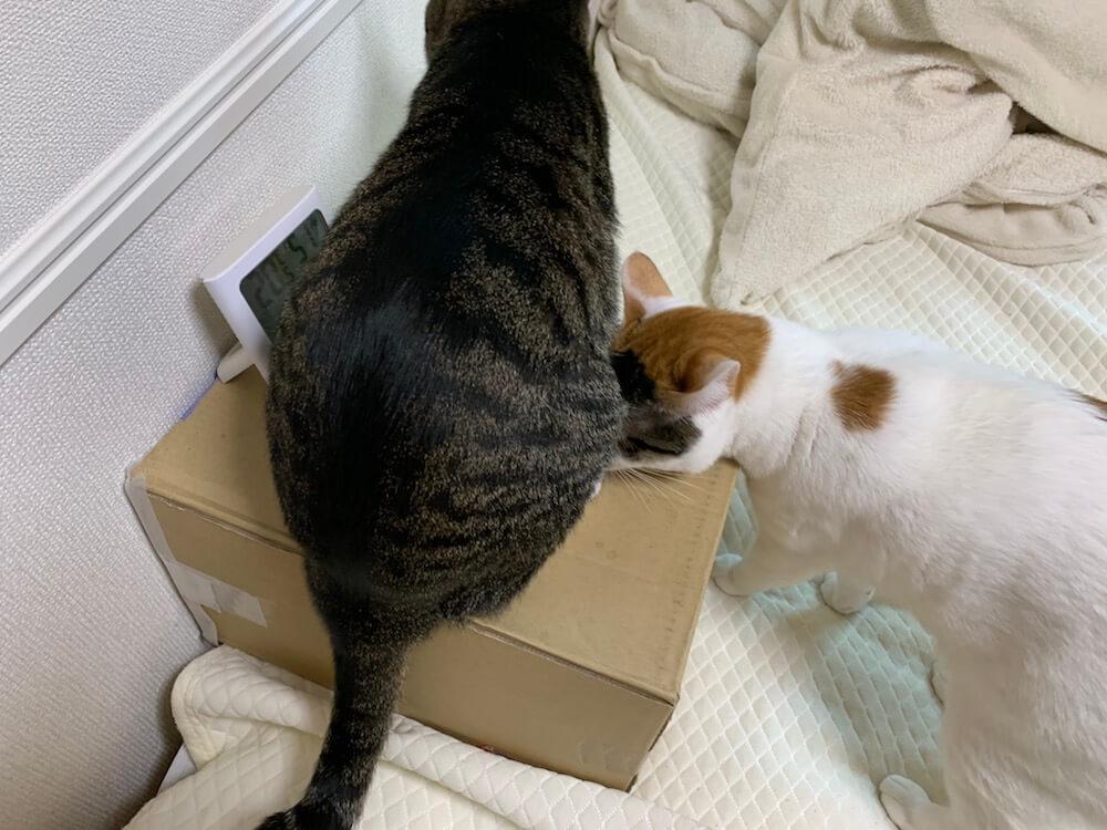 猫 留守番 暖房 エコ 湯たんぽ 三毛猫 キジ白 湯たんぽハウス