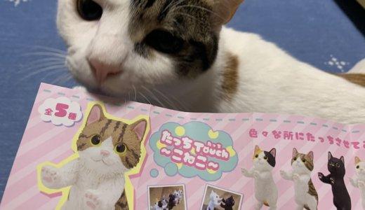 【たっちtouch〜こねこ〜】リアルさと可愛さのバランスが絶妙な猫のフィギアにメロメロです!