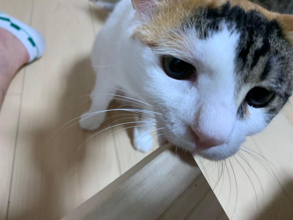 猫 ヒゲ 保管 拾う 落ちた 髭 三毛猫