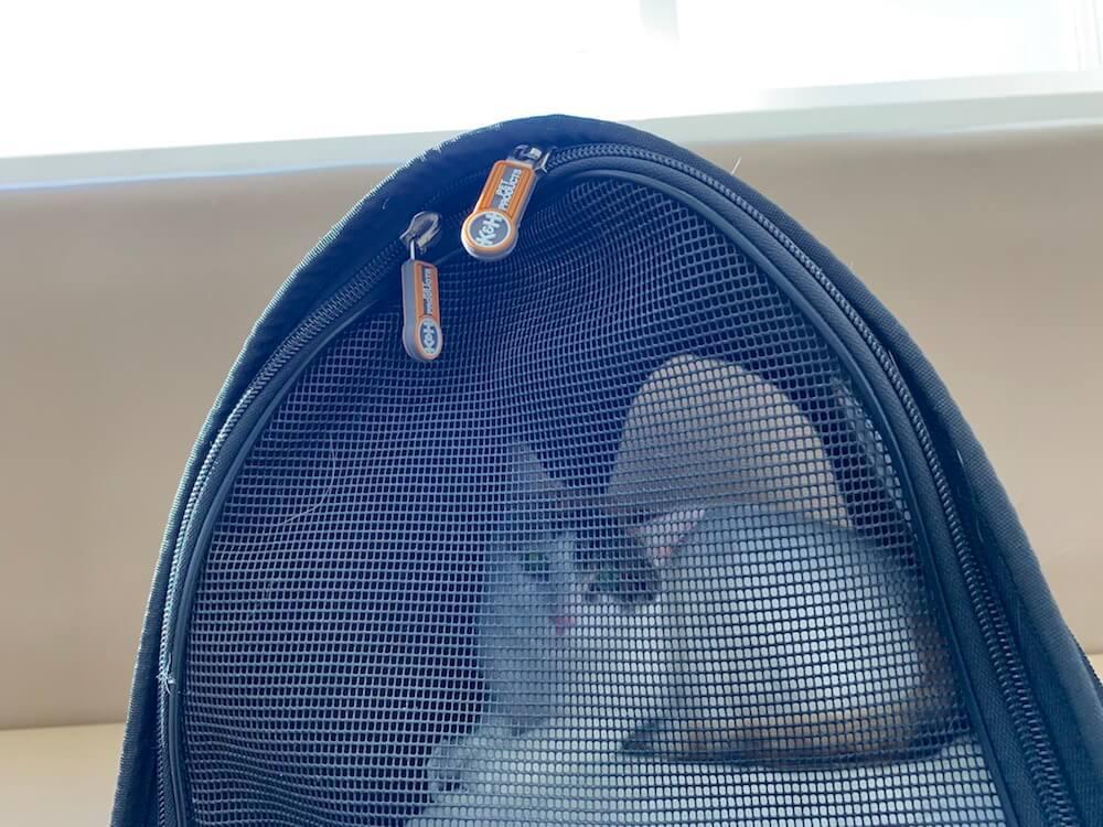 猫 嘔吐 吐く 吐いた 戻した リバース 三毛猫 病院 吐瀉物
