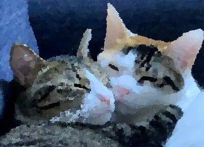 Twitterであめとつゆの猫イラストを描いて頂きました!絵が描けるって素敵っ!