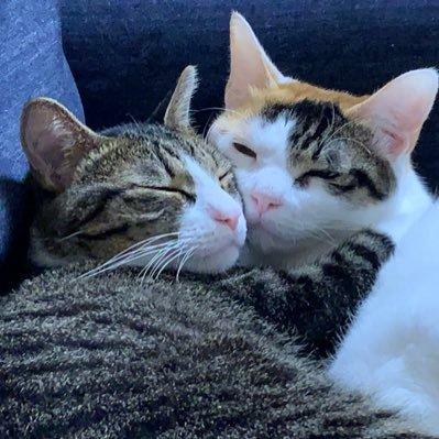 キジ白 三毛猫 猫