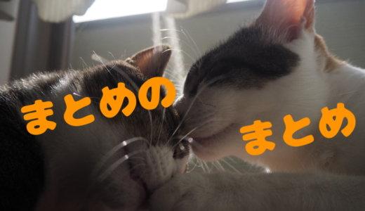 まとめのまとめ 記事 三毛猫 キジ白